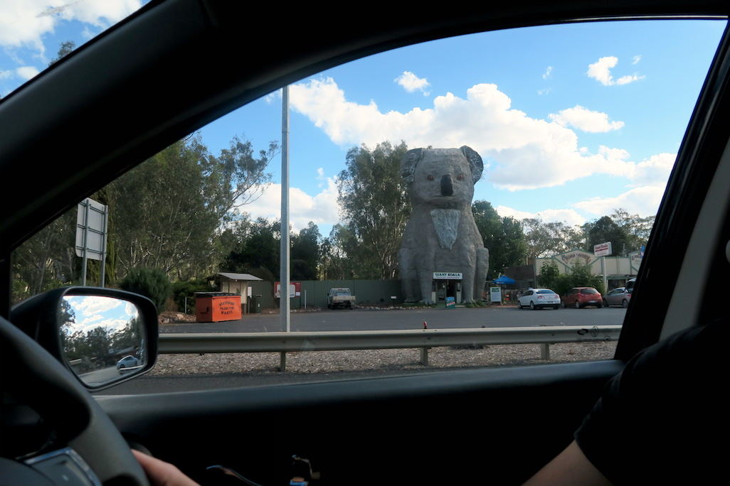 Big Koala, Horsham, Melbourne to Adelaide drive