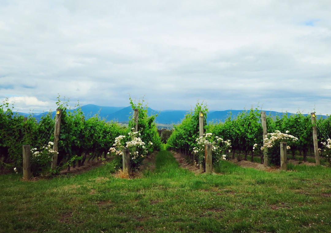 Yarra Valley wine tour, Vineyards, Domaine Chandon, Yarra Valley