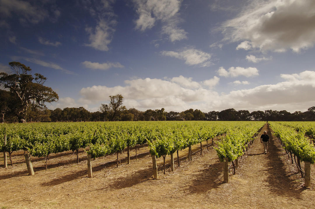 Langhorne Creek Vineyards, South Australia