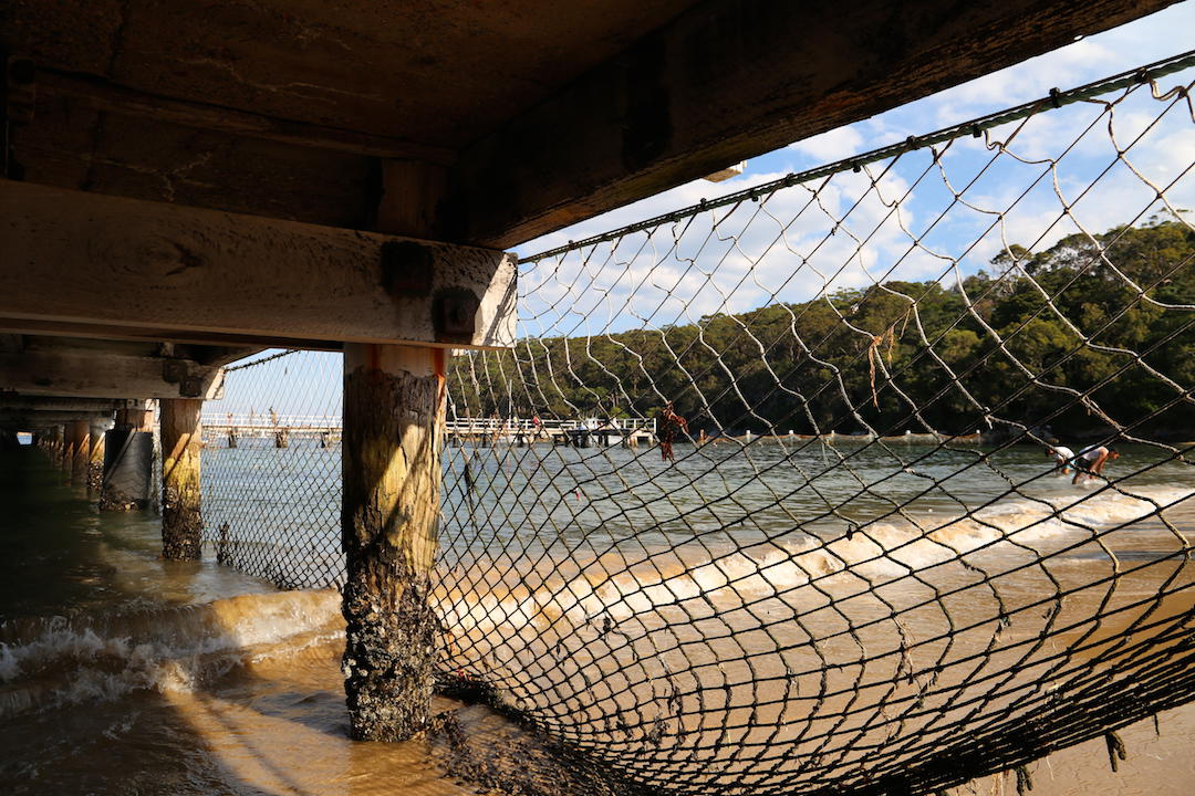 Things to do in Sydney, Shark net, Clifton Reserve and Beach, Mosman, Sydney
