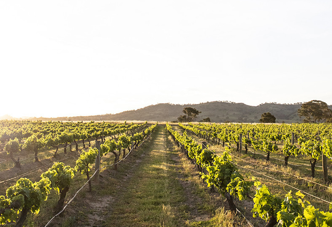 Burnbrae Wines, Mudgee, New South Wales