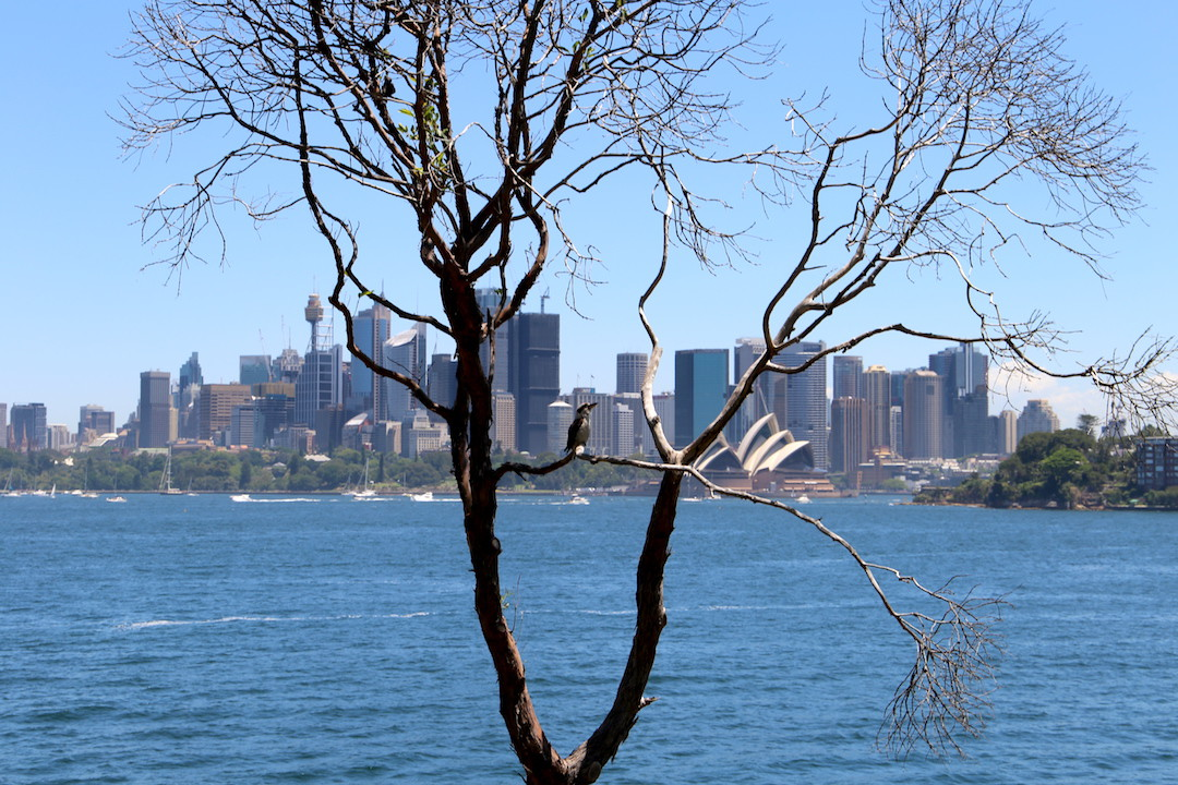Cremorne Point Reserve, Lower North Shore, Sydney, Cremorne Point to Taronga Zoo walk